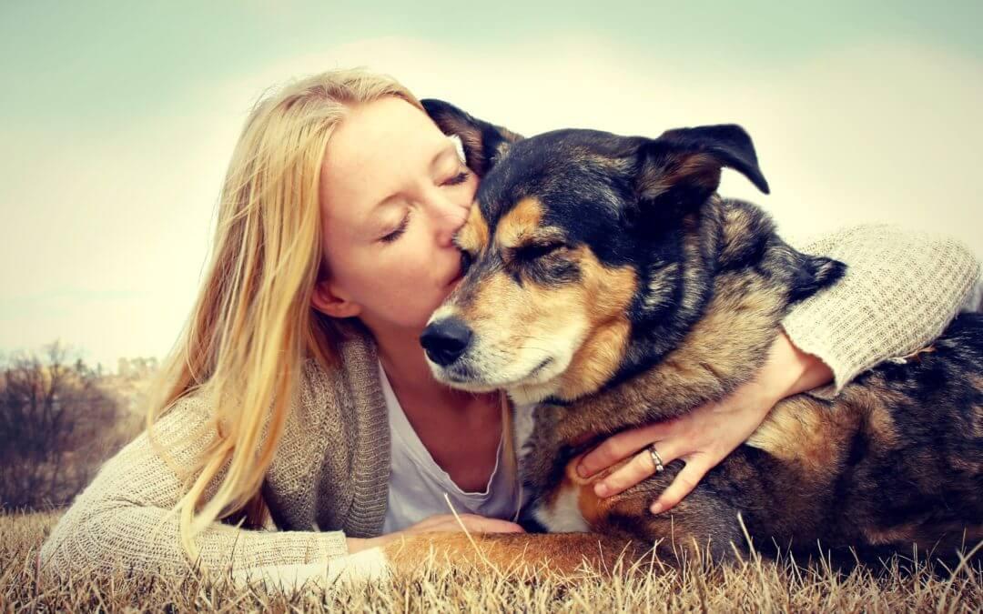 Hoe worden huisdieren verdeeld na een scheiding?